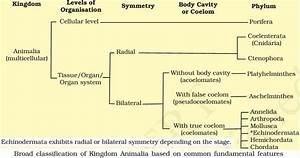 Classification of Animal Kingdom (Animalia)