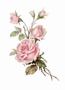 Pot De Fleur Transparent : vintage pink rose png cut out from an old postcard changed yellow rose to pink p1022 free ~ Teatrodelosmanantiales.com Idées de Décoration