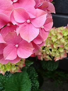 Wann Wird Lavendel Geschnitten : sommerflieder wann schneiden sommerflieder schneiden ~ Lizthompson.info Haus und Dekorationen