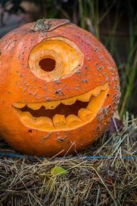 Free, Pumpkin, Carving, Stencils, Designs, And, Patterns, Find, Ideas, Online, Photos