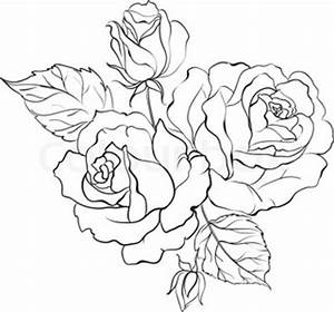 Realistic Rose Drawing Outline Sketch Coloring Page