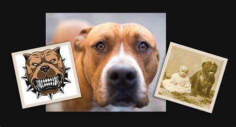 Dangerous  Ee  Dogs Ee   Myths And Misconceptions From Both Pit Bull Advocates And Opponents Dog