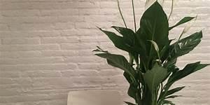 Plante D Intérieur Haute : plantes d 39 int rieur et plantes vertes entretien culture ~ Dode.kayakingforconservation.com Idées de Décoration