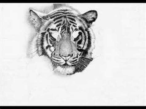 bengal tiger pencil art youtube