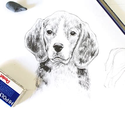 easy realistic animals drawing drawings art gallery