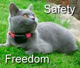 shock collar for cats getting the correct cat proof fencing cat behaviour cat