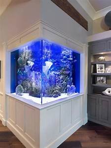 Pin By Stephen Johnson On Reef Tanks  With Images