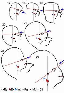 Hearing - Outer Ear Development