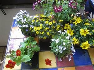 Blumen Für Den Balkon : orange balkonblumen zeichnungen von susanne haun ~ Lizthompson.info Haus und Dekorationen