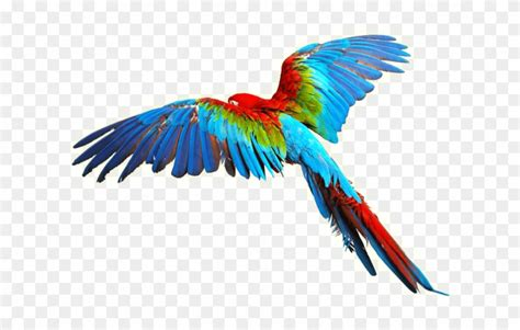 aves png 20 free Cliparts | Download images on Clipground 2021