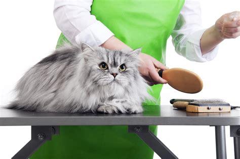 pet groomer cat grooming choose pets groom professional salon