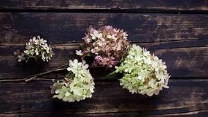 Tischgestecke Selber Machen : hortensien trocknen h bsche tischdeko selber machen ~ Frokenaadalensverden.com Haus und Dekorationen