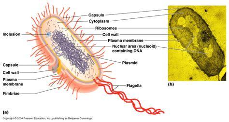 Biology Ccjjgoesmoo