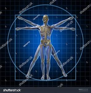 Vitruvian Human Skeleton Man Body Frontal Stock