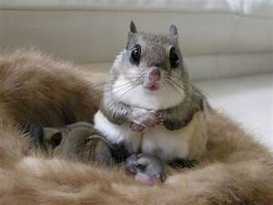 Baby Tiere Sind So Süß Pictures to pin on Pinterest