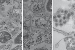 New Type Of Virus Found In The Ocean