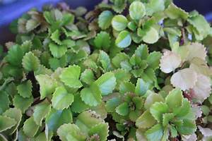5 Plantas para atraer el dinero Plantas para