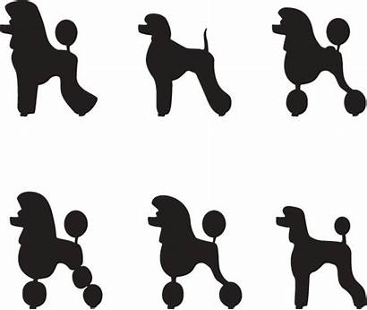 Poodle Silhouette French Clipart Standard Library Clip