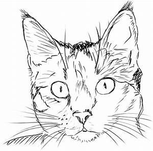 Cat, Face, Clip, Art, At, Clker, Com