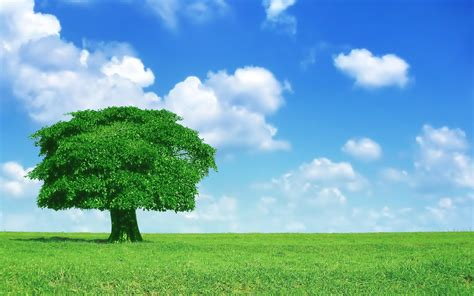 Tree Backgrounds by 4k Lonely Tree Wallpapers High Quality Free