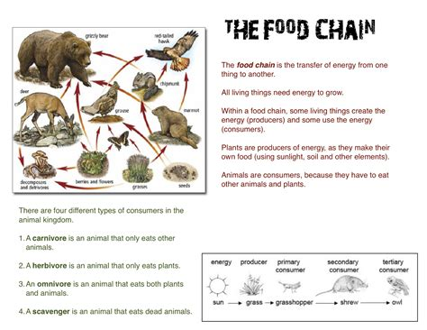 the dyslexic homeschooler new food chain worksheets i