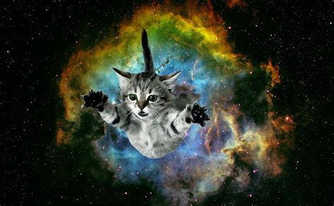 Galaxy Animal Wallpaper - galaxy cat wallpaper iphone cats wallpapers and backgrounds