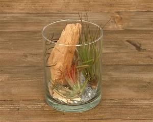 Tillandsien Im Glas : tillandsia im glas cylinder small corsa webshop luchtplantjes tillandsia ~ Eleganceandgraceweddings.com Haus und Dekorationen