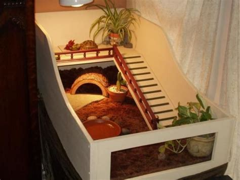 Indoor House Ideas For Your Tortoise