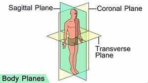 Planes Of Section Anatomy