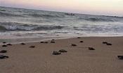 Cayman Eco - Beyond Cayman Jane Goodall: COVID-19 is a ...