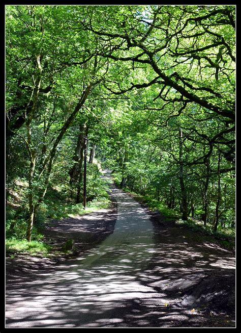english country lane photograph  carla parris