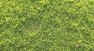 Quand Semer Du Gazon : fiches conseils pour r ussir le semis du gazon ~ Dailycaller-alerts.com Idées de Décoration