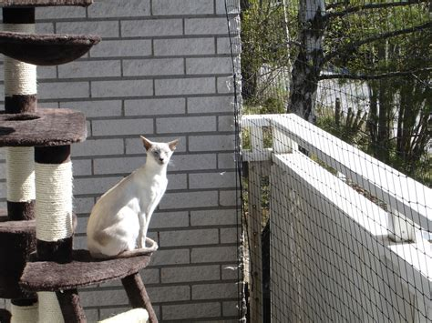 Balcony   Mini lions in our house
