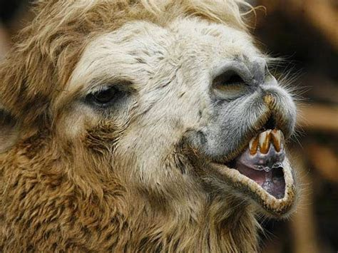 Funny Ugly Animal Pictures