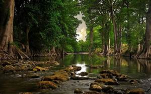 river wallpaper forest hd