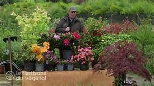 Comment Planter Un Camélia : comment planter un rhododendron cam lia azal e hortensia et autres plantes de terre de ~ Melissatoandfro.com Idées de Décoration