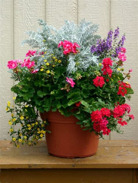 pictures of flowers in pots outdoor container gardening planting a beautiful pot of flowers dengarden