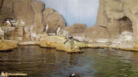 Costo Ingresso Acquario Di Genova - visita all acquario di genova con bambini patatofriendly