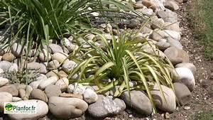 plante autour piscine good cet cosystme o lupuration et With marvelous quelle plante autour d une piscine 5 quelles plantes autour de la piscine