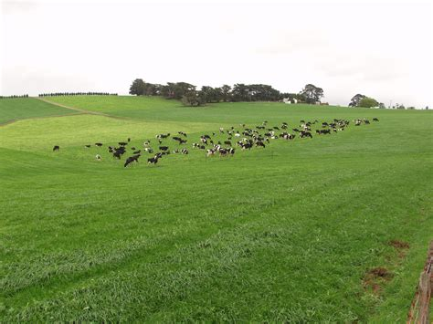 dairy farm with holstein cows in pasture and three silos frank tyndall dairy farm consultant