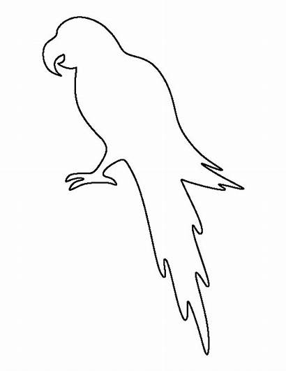 Parrot Outline Template Bird Pattern Clipart Printable