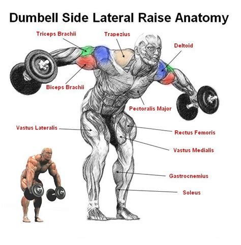 rear pec deckbent lateral raises shoulder exercises for beginning bodybuilders all