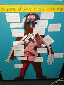 5th Grade Life Science Human Body Model Organs