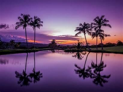Rico Puerto Sunset Palm Fajardo Water Reflection