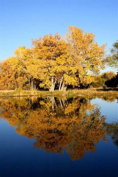Fall Trees Lake Resolution Tree Reflection Domain