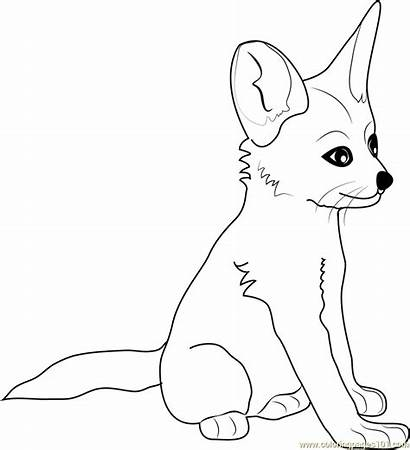 Fox Fennec Coloring Pages Arctic Base Printable