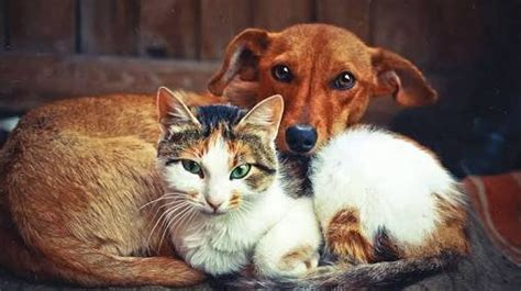 petition save stray animals    loveliest