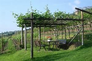 Pergola Mit Wein Bepflanzen : pergola mit wein green garden inspiration pinterest hotels and pergolas ~ Eleganceandgraceweddings.com Haus und Dekorationen