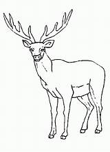 Rocky Coloring Elk Mountain Drawing Printable Clip Popular Library Clipart sketch template