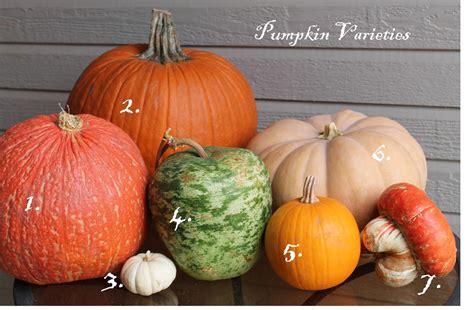 types of pumpkins pumpkin varieties
